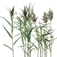 Grass_33