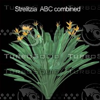 Strelitzia Reginae collection