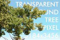 Foreground Tree013