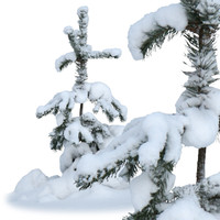 winter-fir3.psd
