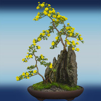 Hi Res Bonsai Tree 03