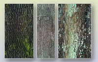 3 Bark Tilable textures