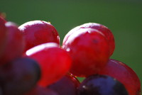 Fruit_Grape_0002