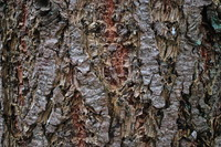 Bark_Texture Pack_0003
