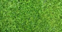 Grass 03