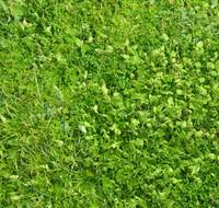 Grass 06