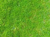 Grass 08