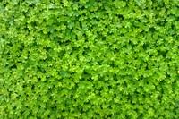 Grass 09