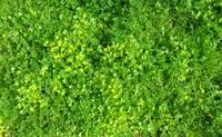 Grass 10
