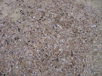 Beach_Texture_0002