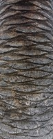 Palm Tree Bark 03