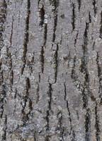 Tree Bark 03
