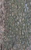 Tree Bark 04