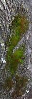 Tree Bark 06