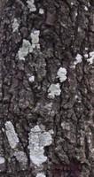 Tree Bark 07