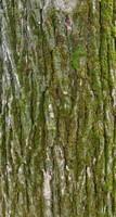 Tree Bark 08