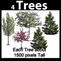 Tree Textures, Flowering, Spruce, Pine