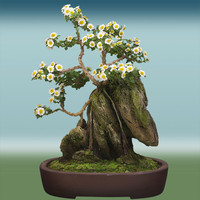 Hi Res Bonsai Tree 01