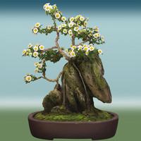 Hi Res Bonsai Tree 01