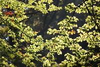 Woodlands_0001