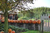Pumpkin_0006