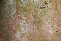 Ground_Texture_0005