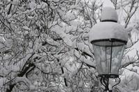Winter Wonderland_0005