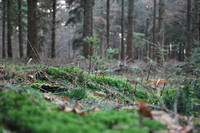 Forest_0004