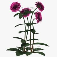 0F Dahlia Purple