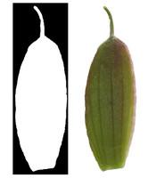 Leaf 001