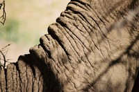 Wildlife_Elephant Trunk
