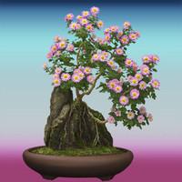 Hi Res Bonsai Tree 02