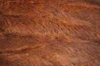 Fur_Texture_0010