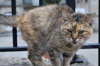 Animal_Cat_0002