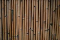Bamboo_Texture_0001
