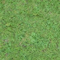 Grassy Ground01