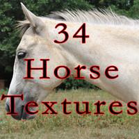 34 Horse Texture Photos