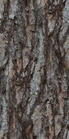 Larch Tree Bark