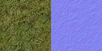 Grass_9880