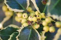 Festive Plants_0002