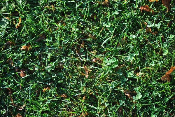 Grass_Texture_0001