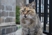 Animal_Cat_0001