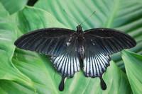 Butterfly_0008