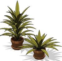 Potted Plant 3
