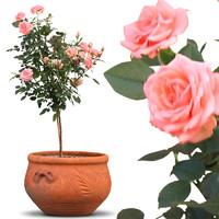 flowers18