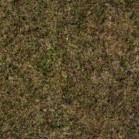 Grass 1b