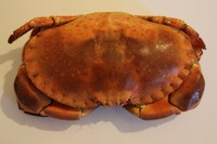 Crab textures