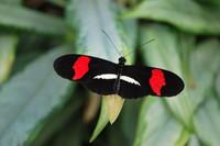 Butterfly_0003
