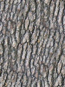 Hardwood Bark
