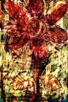 flower Az 00004